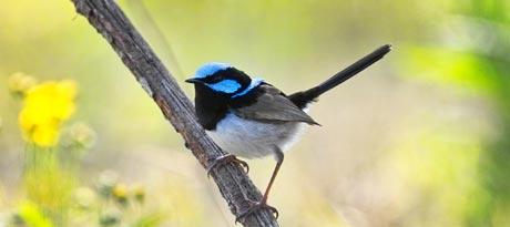 Bird watching at Mt Glorious Getaways